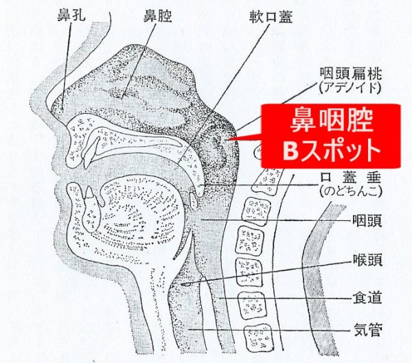 Bスポット図
